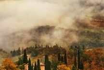 Tuscan dreams - of olives and wine