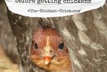 chicken,breeds,coops n stuff