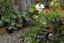 Top Cottage Garden Ideas / Great ideas for creating a cottage gardens. A cottage garden can be anything from a small garden to a large one, loads of top ideas on creating this popular style.