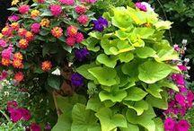Landscaping / Landscaping, garden, yard