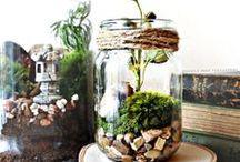 Amazing indoor plant ideas