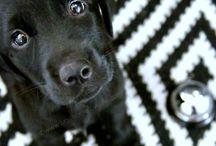 Kutyához