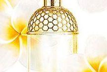 Olfactory Center  / Perfumes, fragrances, essential oils