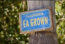Cali, Dude  / Beautiful field photos from our California farms