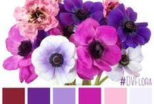 Color Palettes / Pulling beautiful colors from creative arrangements, bouquets, table-scapes and more!