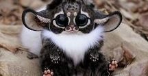 Animal word / Beautiful pictures of creatures