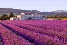 D .G-6.2.   Douce France, Provence, / Toutes les régions du sud de la France / by Monique Trépanier