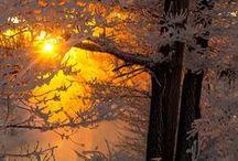 ЗИМА - ЖЕЛТЫЙ, КОРИЧНЕВЫЙ / winter yellow orange brown