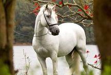 БРАТЬЯ МЕНЬШИЕ - Ⅲ лошади