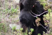 Fauna en mis viajes (Blog Mochila y GPS)