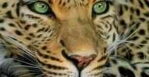 Animal world.Wild cats / Дикие кошки
