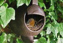 I love birds! / by Louise Tietjen