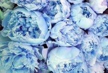 Palettes Blue