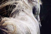 Horse whisper / Horses, beauty, power, animals, living art