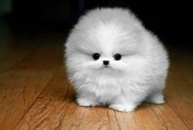 Cute animals / Very cute animals