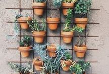 GARDEN - DIY / Ideas and inspiration for the garden