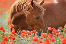 Comfy Horses