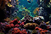 Underwater! AS / by Amber Sheene✌🏻
