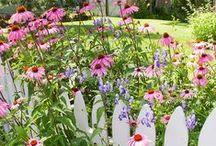in the garden / by Victoria Schumacher