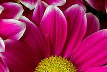Gardening / by Jordyn Ivie