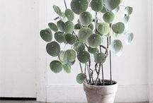 L I F E  I N S I D E / Indoor plants