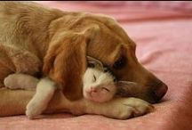 Cats & Dogs! / Visit http://dogwork.com/ for the coolest cat and dog videos on the planet. Yeah!  / by DogWork