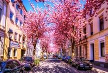 spring / my favourite season