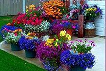 Garden Inspiration / by A Massaro