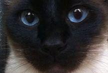 Kitty Cats / Cats  / by A Massaro
