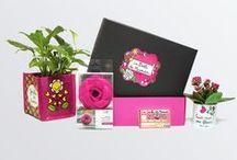 Boîtes collector garnies / Des boîtes dessinées par Valérie Nylin et commercialisées avec des produits.