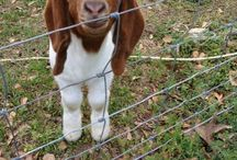 For goat farming / Lol