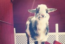 Just adorable / Cute animals ... I have no life