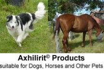 Axhilirit for Horses, Dogs, Cats and other PETS / Axhilirit HO Skin Enhancing Healing Oil and Axhilirit E Eczema Moisturizing Products are suitable for use on pets such as dogs, cats and horses. Refer to www.healing-oil.co.za for more information.