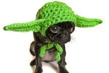 Knitting Dog Gear