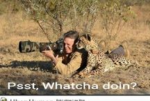 South Africa: Wild life