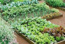 Garden: Tips