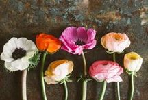 Flowers // Spring / Sprig flower inspiration