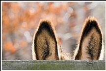 I Love Donkeys ! / J'aime les Anes !