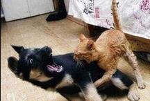 Animal Emotions / emotions animales : peur agressivité joie etc