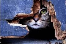 Meoww !