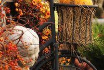 Fall ideas / by Cathy Schmidt