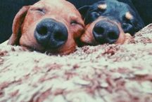 PUPTREST / Cute pups doing cute pup things