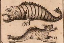 Medieval drawings & engravings
