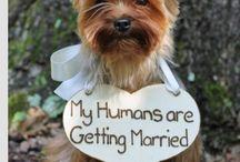 Nadia's Wedding  / Wedding Ideas, plans, etc
