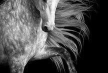 Eläimet ~ beatiful / Kauniit ja suloiset eläimet