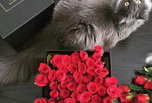 ❤️ Bouquet Garni Floral Shoppe, Kuala Lumpur / Bouquet Garni Floral Shoppe Ben's Independent Grocer, Publika Shopping Gallery, Jalan Dutamas 1, Hartamas Heights, 50480 Kuala Lumpur   dianthus.goh@gmail.com   012 7057999 (Dianthus)