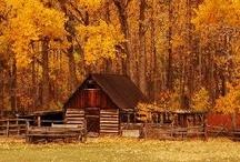 Fall / by Debbie Miles