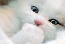 Aaaawww ~ Cute!