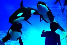 From our Guest's View / Unforgettable moments at SeaWorld captured through the eyes of our guests