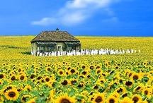 Places i love / by Юлія Шпак